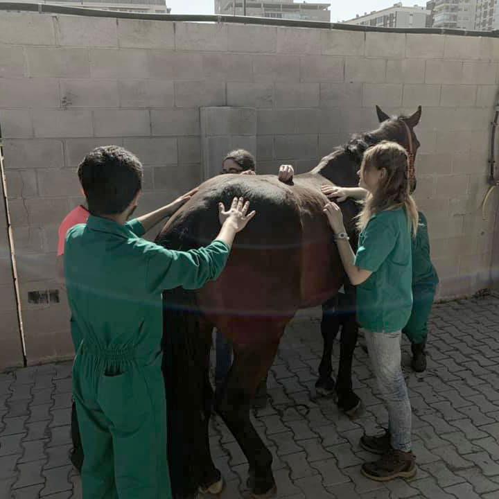 Mario Soriano tratamiento osteopatia instituto veterinario equino
