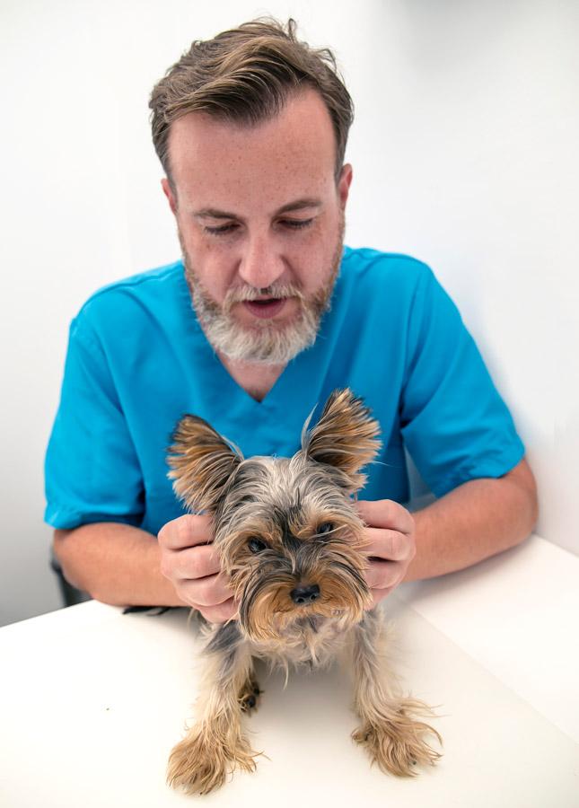 instituto de osteopatia veterinaria
